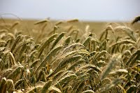 Agro & Food Industry